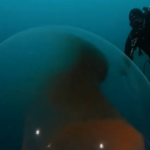 Alien-like giant squid egg found floating under Arctic Ocean.