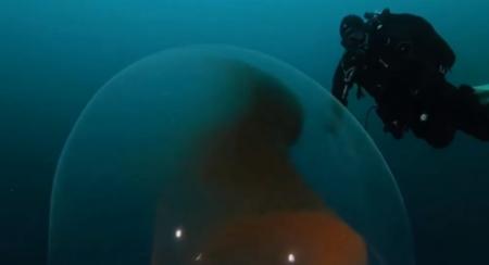 Alien-like giant squid egg found floating under Arctic Ocean.