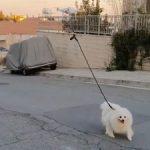 Drone walks dog amid coronavirus lockdown in Cyprus (weird news).